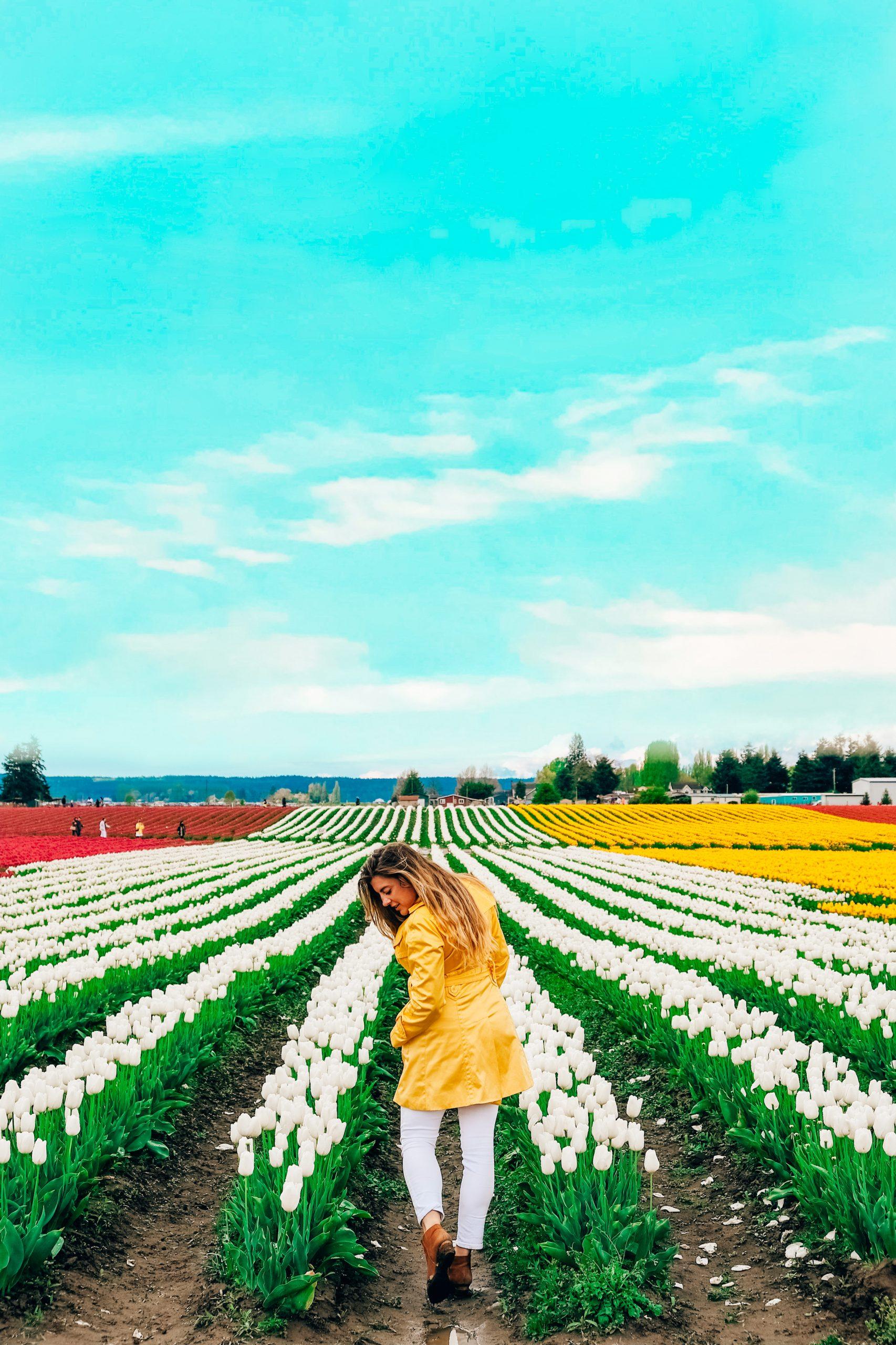 The Tulip Festival of Skagit Valley