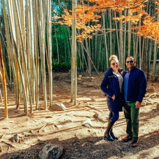 Things to do in Kyoto:  Just a short train ride from the city, see the Sagano Bamboo Forest, where these towering plants can reach 30 meters high! (That's almost 100 feet!)