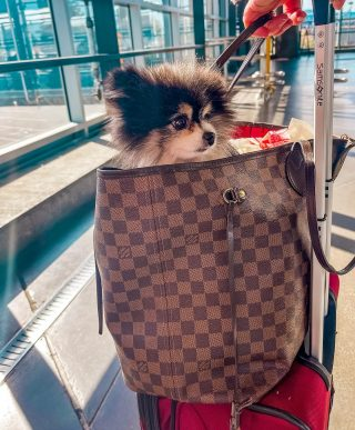 @jimmychewthepom is wishing everyone a happy National dog day. Tell me your dog's name in only emojis and we will try to guess!  Happy #nationaldogday