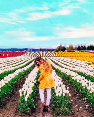 Have you been to a tulip festival? Check out my latest blog post for why 2021 is the best year to visit the Skagit Valley Tulip Festival in Washington. Link in bio. . . . . . . . . . #skagitvalleytulipfestival #tulipfestival #pacificnorthwest #springtimeflowers #flowerbulbs #gardenersworld